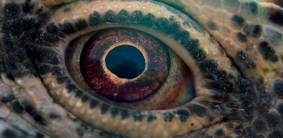 Voyage of time Reptile eye